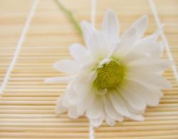 white daisy flower with green center photo.jpg