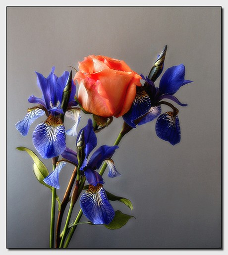 Rose and Iris flowers picture.jpg