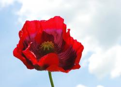 poppy flower wedding pic.jpg