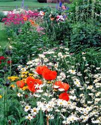 garden flowers with poppies and others.jpg