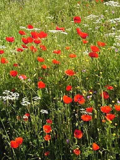 wild flowers picture.jpg