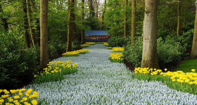 One of world's most beatutiful garden pictures of blossing bulb flowers mosaic with 60,000 bulbs.PNG