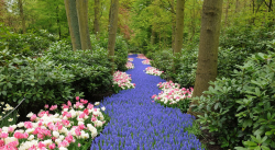 One of world's most beautiful garden in Keukenhof, Netherlands and the theme for 2013 is UK.PNG