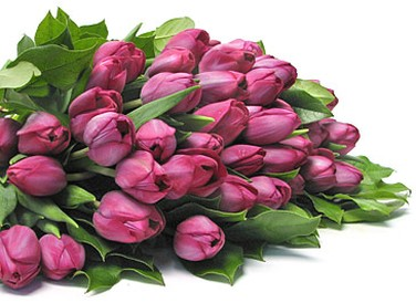 purple tulips bouquet picture.jpg