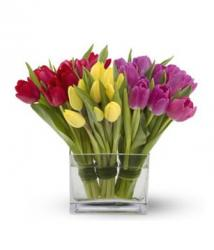 picture of modern Tulip flowers.jpg