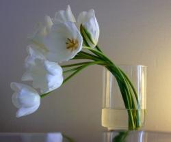 modern tulips arrangement picture.jpg