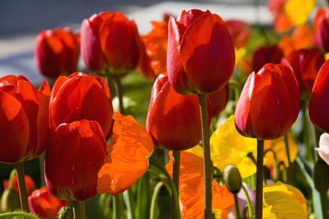 colorful flowers with tulips.jpg