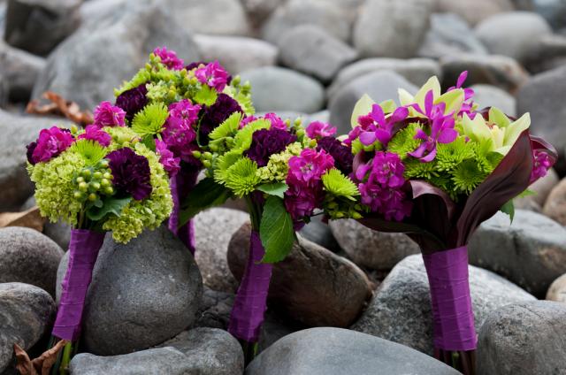 Plantas | Causas del color