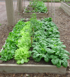 Modern kitchen garden with full of veggies.PNG