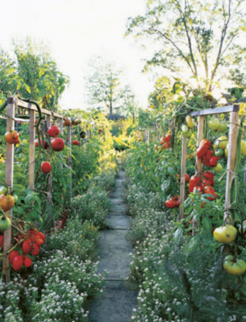 Ornamental vegetable garden pictures with full of ripe tomatoes.PNG