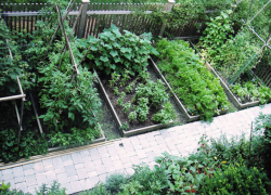 Photo of Vegetable garden layout ideas.PNG