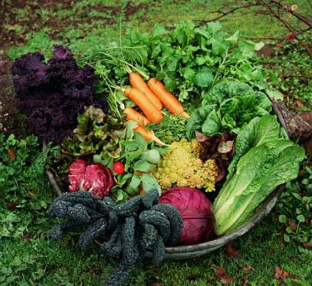 Pictures of vegetables basket png for Vegetable garden images