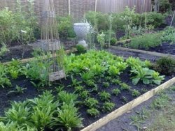 Plants garden ideas for home vegetable garden.PNG
