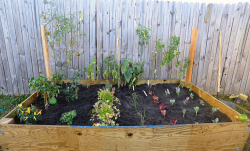 Raised vegetable bed photo.PNG