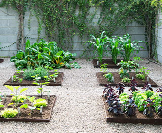 Raised vegetable beds pictures.PNG
