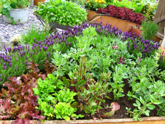 Raised bed island garden ideas with veggies and herbsPNG