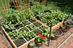 Square foot vegetable garden veggies and herbs and flowers.PNG