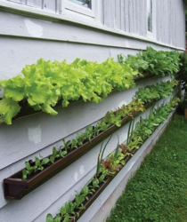 Unique vegetable garden ideas with veggies growing on gutters_gutter gardens.PNG