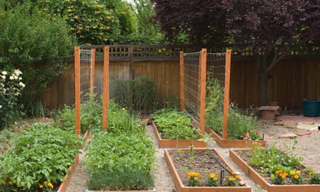 Photograph of urban garden ideas flowers