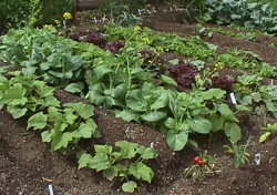 Vegetable fruits garden pictures.PNG