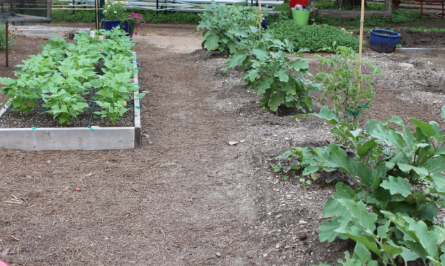 Vegetable garden with ground and island garden.PNG