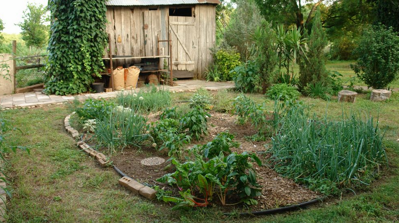 Island vegetables garden images.PNG