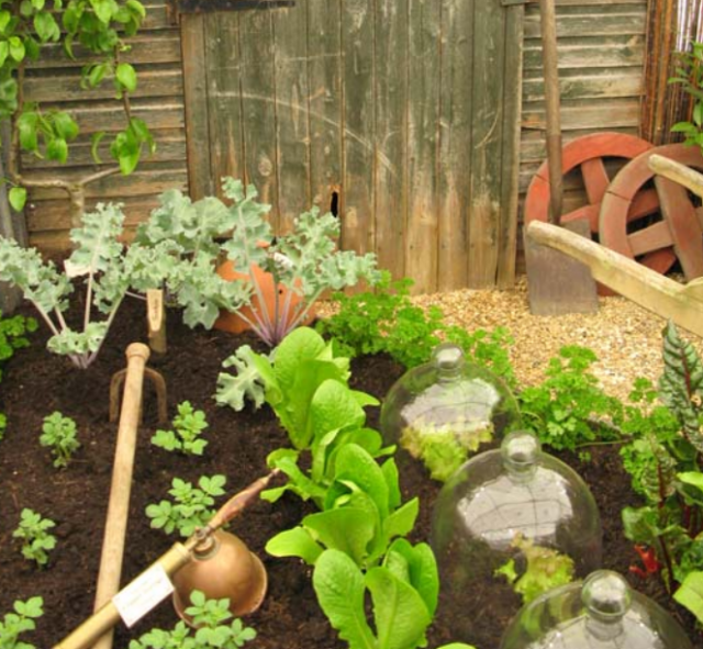 Cool vegetable garden picture.PNG