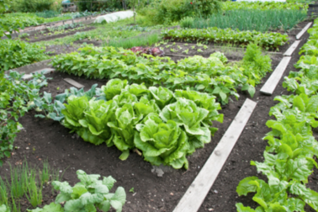 easy vegetable garden ideaspng - Vegetable Garden Ideas For Spring