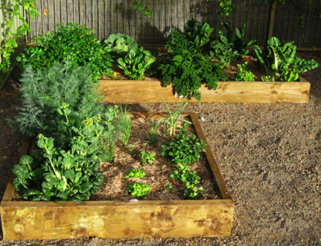 Great ideas for vegetable garden photos png hi res 720p hd for Great vegetable garden ideas