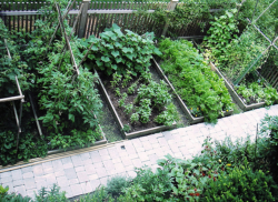 Great ideas of  vegetable garden in wood islands.PNG