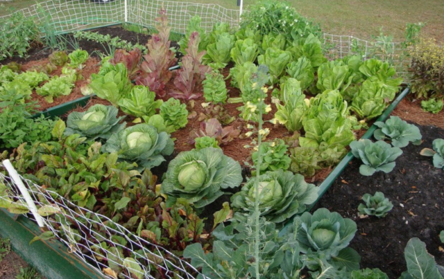 Photo Of Backyard Vegetable Garden Ideas Flowers