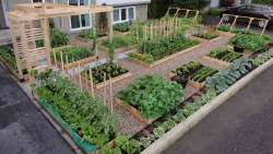 Beautiful modern vegetable island garden in the front yard.PNG