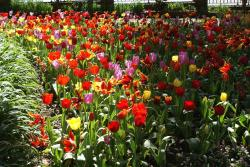 beautiful flowers garden.jpg