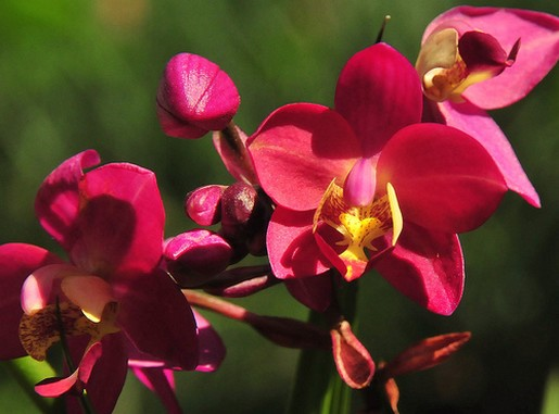 orchid flowers gallery [p. ], Natural flower