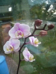 pretty flowers orchids.jpg