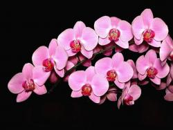 pink orchid wedding flowers.jpg