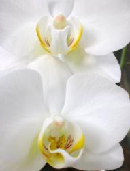 picture of white orchids.jpg