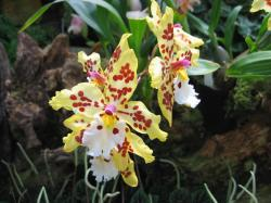photo of beautiful orchids flowers.jpg
