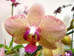 orchid with dots.jpg