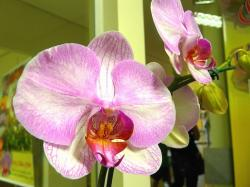 light purple orchids photo.jpg