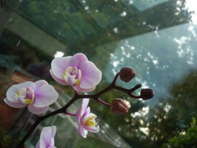 indoor flowers orchid.jpg