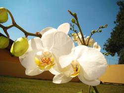 in garden flowers white orchid flowers.jpg