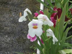 home garden orchid flowers picture.jpg