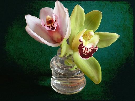 Cymbidium Orchids arrangement.jpg