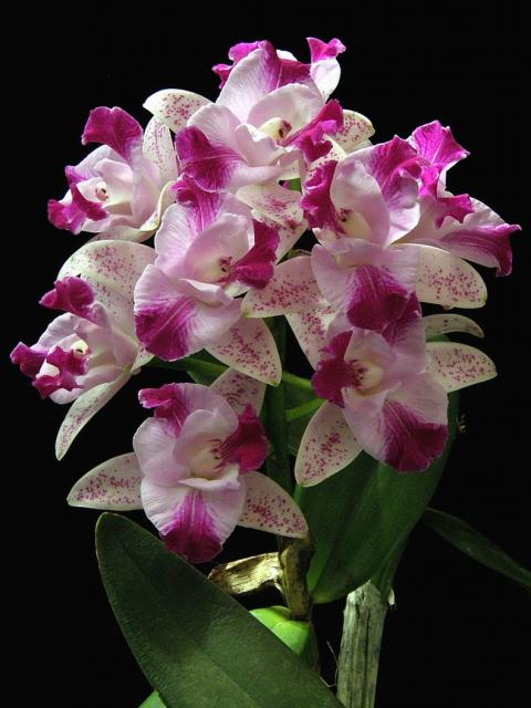 Gardening With Orchids - Flower Gardening Guide