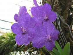 bright purple orchid flowers photo.jpg