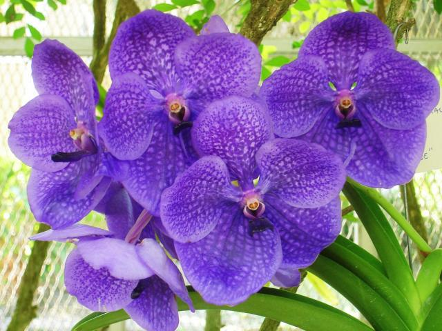 orchid flowers gallery  photos, Beautiful flower