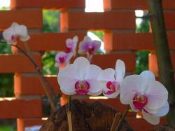 white orchids with purple eyes.jpg