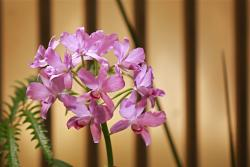 small purple orchids photo.jpg