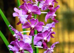 purple orchids.jpg